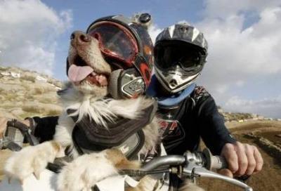 Guida da cani: multa assicurata!