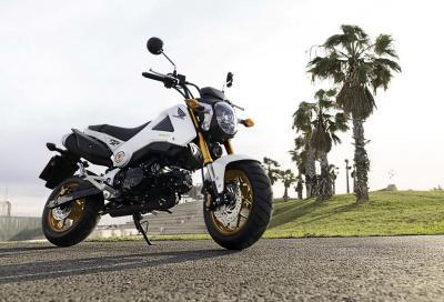 Honda MSX125: per il 2014 arriva l'oro!