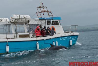 L'Irlanda tra parchi, delfini e leggende
