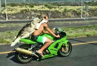 Posso portare il mio cane in moto con me?
