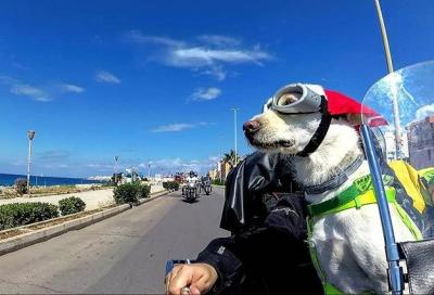Due biker e un cane globetrotter