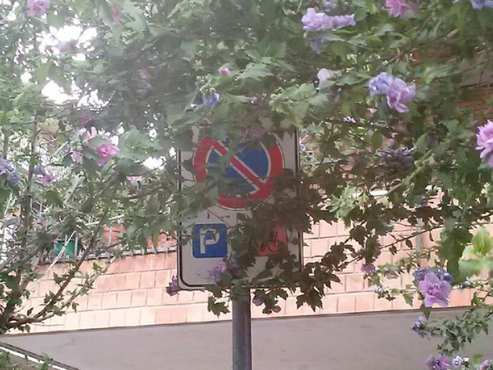 Molte volte i cartelli stradali sono illeggibili in quanto coperti dalla vegetazione